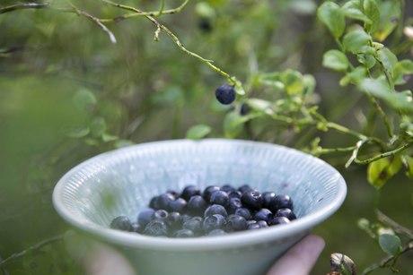 färska blåbär stoppande